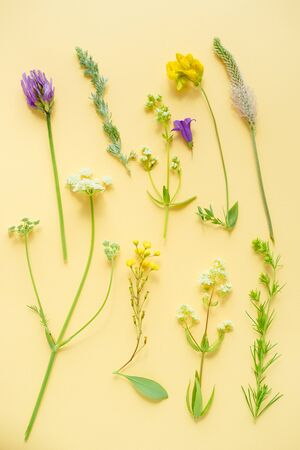 a variety of wild flowers, daisies, Lupin, onion and grass, flat paper yellow background, Botanical pattern