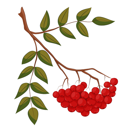Vector illustration of branch with outline Rowan or Rowanberry  イラスト・ベクター素材