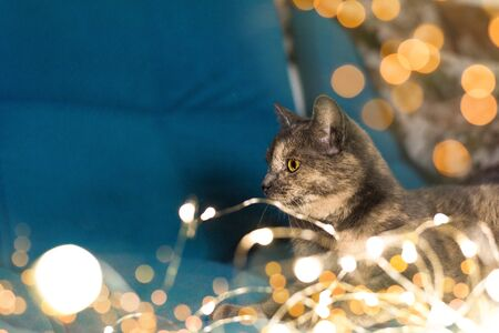 creative magic cat with garlands for baptism. light bokeh background. close-up of an animal, space for text.
