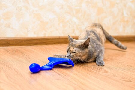 comb for cats from wool. pet care at home. caring for the purity of cat hair. blue hairbrush with wool. the cat is caressing the comb.