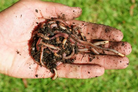 earthworms: Worms!!