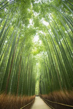 途中竹の森、京都、日本