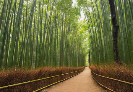 Way through the bamboo forest, Kyoto, Japan