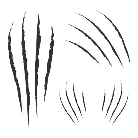 Garras negras rasguño animal rasguño pista. Gato tigre arañazos en forma de pata. Rastro de cuatro uñas. Elemento de diseño divertido. Diseño plano. Fondo blanco. Aislado. Ilustración vectorial. Ilustración de vector