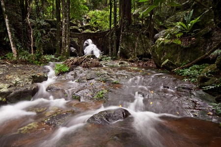 waterfall at rainforests creek with some rocks in foreground photo