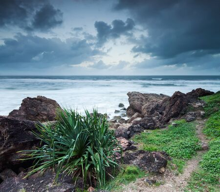 australian seascape in the evening with native plant in foreground Stock Photo - 8603618