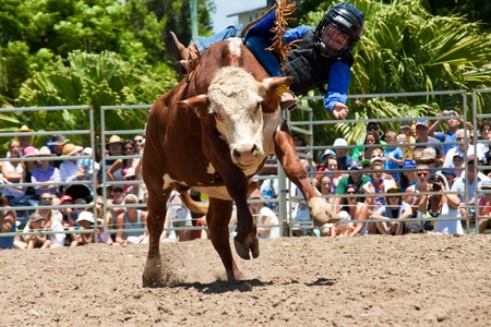 GOLD COAST, AUSTRALIA - JANUARY 26, 2011: Unidentified brave little boy rides bull on January 26,2011 in Gold Coast, Queensland, Australia. The rodeo show was part of Australia Day celebration.