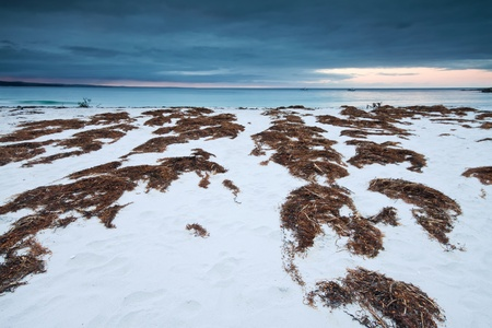 tasmanian beach at twilight with interesting seaweed in the foreground (binalong bay,tasmania,australia) photo