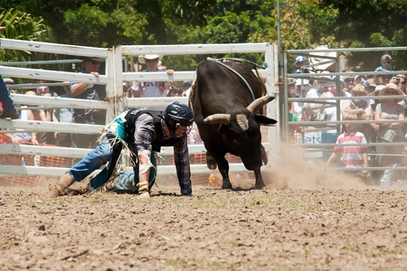 GOLD COAST, AUSTRALIA - JANUARY 26, 2011: Unidentified cowboy run away from dangerous bull on January 26,2011 in Gold Coast, Queensland, Australia. The rodeo show was part of Australia Day celebration.