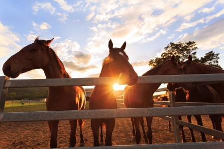 curious young horses at sunset, photo taken from low angle