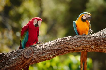 qld: Parrot at Currumbin Wildlife Park, Qld, Australia