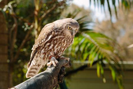 qld: Animals  at Currumbin Wildlife Park, Qld, Australia