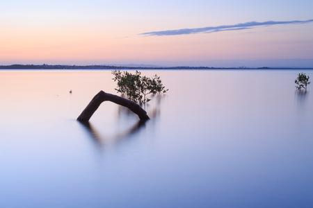 wellington: Australian mangrove trees at sunset (Brisbane, Wellington Point, QLD, Australia)