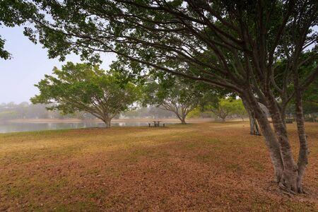 qld: Foggy morning along Evandale lake (Gold Coast, Surfers Paradise, QLD, Australia)