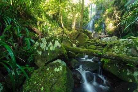 Chalahn Falls on Toolona Creek Circuit in Lamington National Park, Gold Coast, QLD, Australia