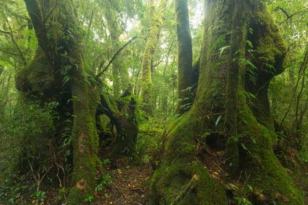 Walk in Australian rainforest on Toolona Circuit, Lamington National Park, QLD, Australia
