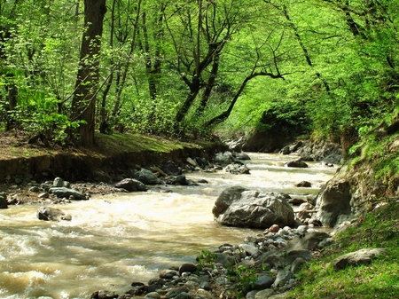 Forests of North Iran photo