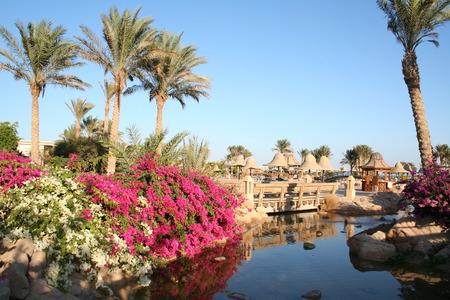 Egypt. Resort. Flowers  Standard-Bild