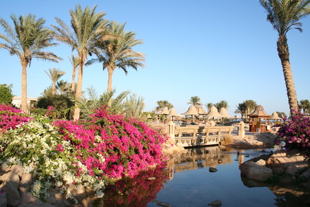 Egypt. Resort. Flowers  Stock Photo