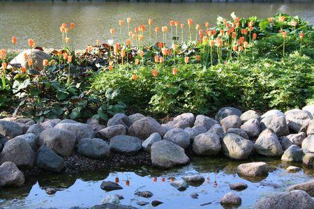 Finland. Kotka town. Park Sapokka. Orange tulips photo