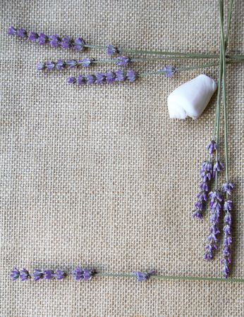 Bunch of lavender flowers and white sea shell on sackcloth background photo