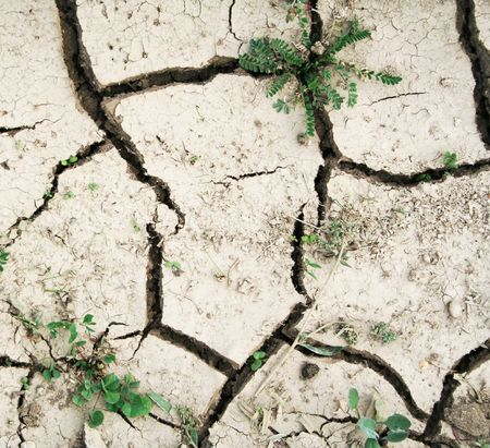 clod: Grass on the ground with fissures texture can use as ecocatastrophe background