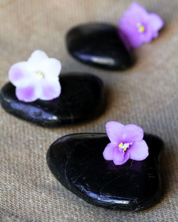 Spa black stones with lilac flowers on sackcloth background photo