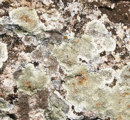 Abstract mold on stone grunge texture as background  photo