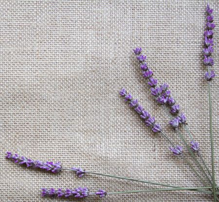 Bunch of lavender flowers on sackcloth background  photo