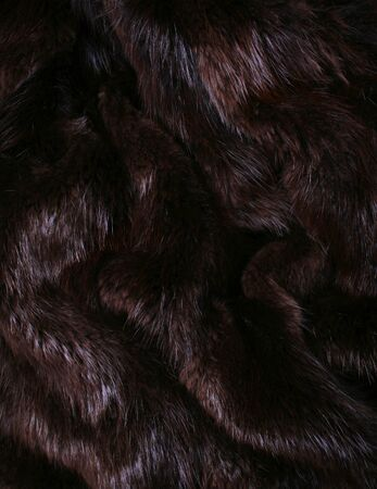 The  brown fur of a beaver can use as a background texture  Stock Photo