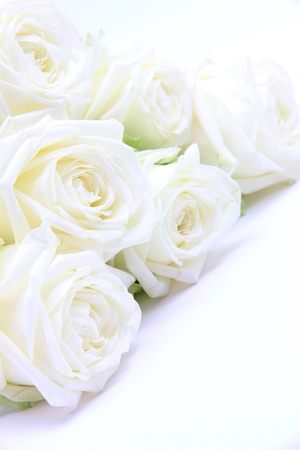springy:  Beautiful white roses as wedding background Stock Photo