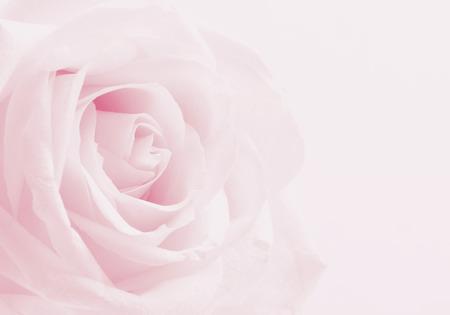 ピンクのバラのクローズ アップは、結婚式のバック グラウンドとして使用できます。ソフト フォーカスをぼかし。セピア色のヴィンテージ パステ