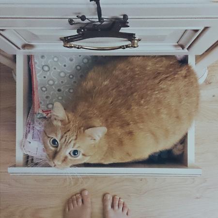 Orange cat sitting on the dresser  Archivio Fotografico