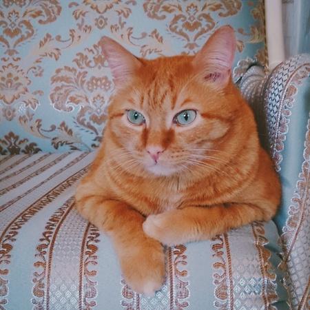 aqua: The Orange cat lies on a sofa