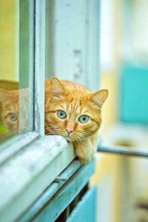 Red Cat lying on the window sill. photo