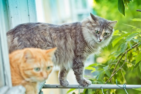 sill: Red and grey cats sitting on the window sill Stock Photo