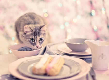 gray cat: French confectionery, pink and white Eclair on gray dish. Cat. Christmas mood