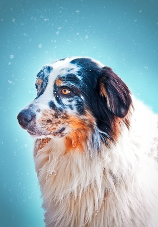 aussie: Blue marble Aussie face portrait on a blue background Stock Photo