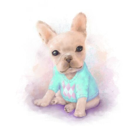 bull dog: French Bull dog puppy on a aqua sweater sits on a white, watercolor painting Stock Photo