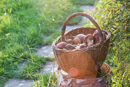 full basket with mushrooms standing on the stub