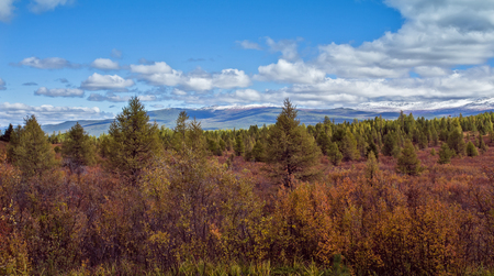 ulagan: yellow and red autumn Dwarfish birches in the Altai mountain Stock Photo