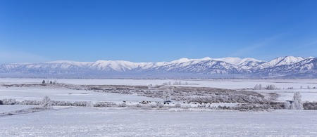 snowy field: group of wild horses in the pasture with mountains in the background