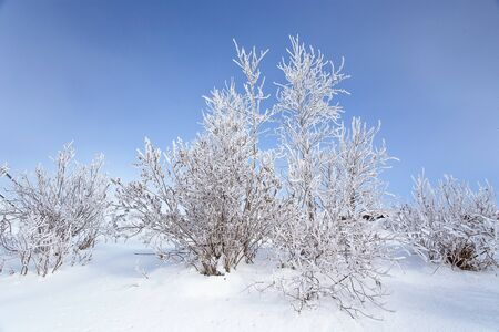 Winter landscape. Trees and bushes with hoarfrost. The water in the river floating mist. cold season. a grayish-white crystalline deposit of frozen water vapor formed in clear still weather, Altai, Siberia, Russia