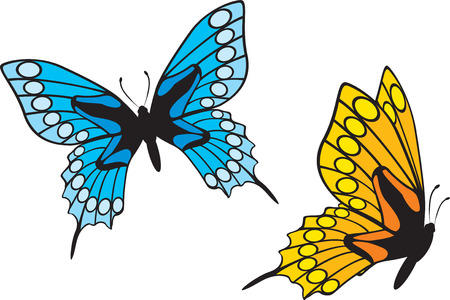 colorful butterfly: Butterflys Illustration