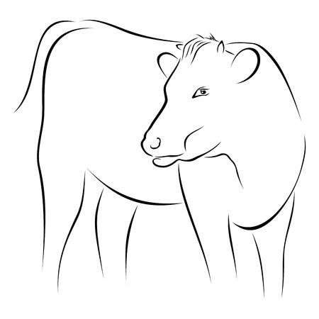 vaca: Vaca en el boceto Vectores