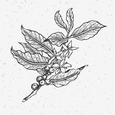 Coffee tree illustration. Vettoriali