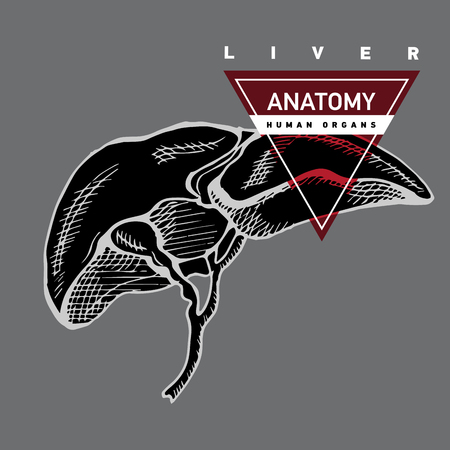 Hand drawing anatomy human liver. Illustration