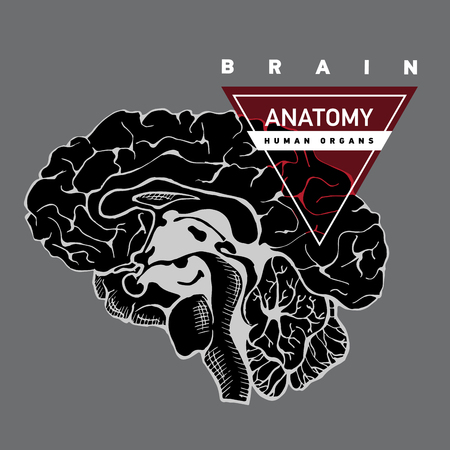 occipital: Brain anatomy.