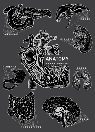 Human organ anatomy set.