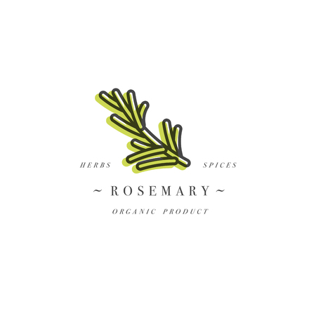Packaging design template logo and emblem - herb and spice - rosemary branch. Logo in trendy linear style. Vectores